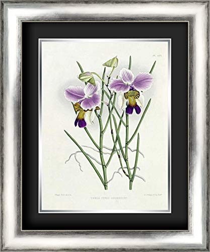 The Orchid Album Plate 475 19x24 Silver Contemporary Wood Framed and Double Matted (Black Over Silver) Art Print by Warner, (Orchid Album Plate)