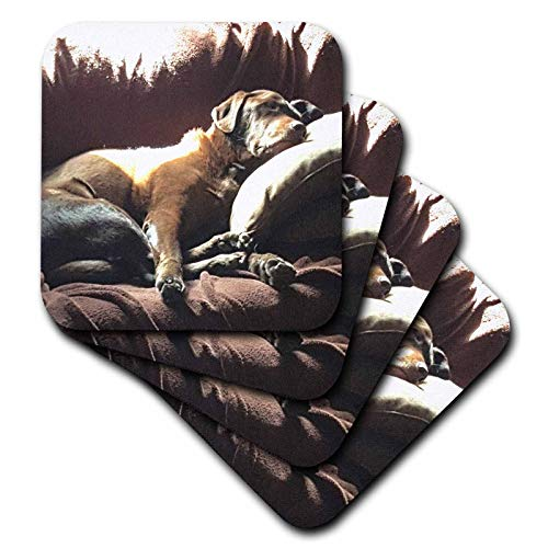 3dRose TDSwhite - Miscellaneous Photography - Lazy Dog Days Sunny Nap Artistic Chocolate Lab Labrador Retreiver - set of 4 Coasters - Soft (cst_300646_1)