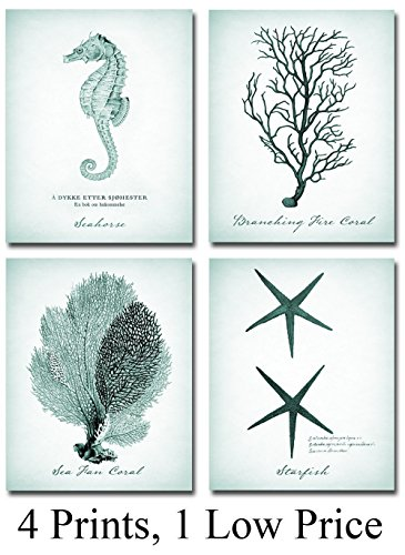 Coral, Starfish, Seahorse Prints - Set of Four Photos (8x10) Unframed - Great Beach House Decor