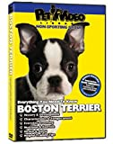 BOSTON TERRIER DVD: Everything You Should Know + Dog & Puppy Training Bonus