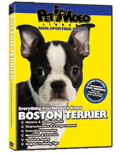 BOSTON TERRIER DVD: Everything You Should Know + Dog & Puppy Training Bonus ()