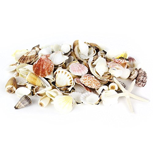 CYS EXCEL Colorful Sea Shells, Assorted Mixed Beach Seashells for Nautical Decor (1 Bag - Approximately 200 - Collection Sea Shell