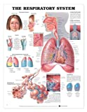 The Respiratory System, Anatomical Chart Company Staff, 1587797046