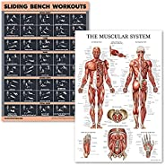 2 Pack Muscular System Anatomical Poster + Sliding Bench Exercise Workout Chart (Compatible with Total Gym, We