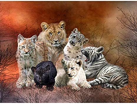 Owls 16x20 Inch Linen Canvas Paintworks Digital Oil Painting Canvas Kits for Adults Children Kids Decorations Gifts Paint by Number Kits No Frame