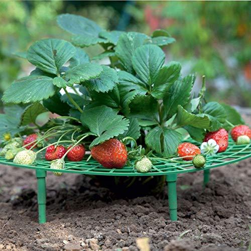 pengyu- 5 Soportes para Plantas Forma de Fresa para el Crecimiento ...