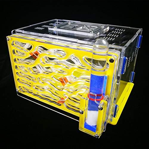 VistorHies - Ant Acrylic Nest Plaster Nest Ant Home C1 Ant farm