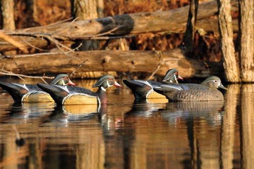 Final Approach Gunners HD Wood Duck 6 Pack