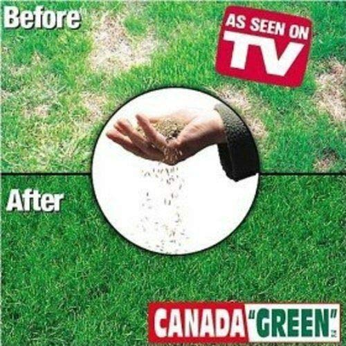 Canada Green Grass prato seminale-4 Lbs di Farmerly Semi organici