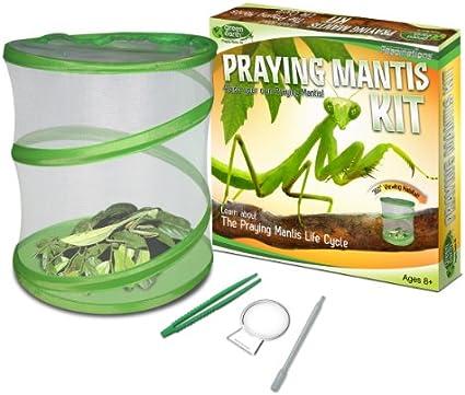 Amazon Com Fascinations Greenearth Praying Mantis Kit Toys Games