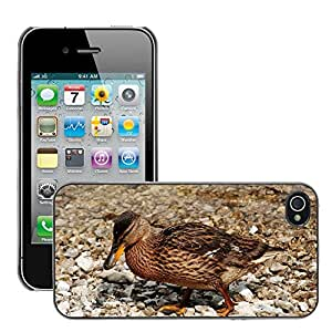 Just Phone Cover Etui Housse Coque de Protection Cover Rigide pour // M00139705 Pájaro Pato Agua Animales Pájaro // Apple iPhone 4 4S 4G