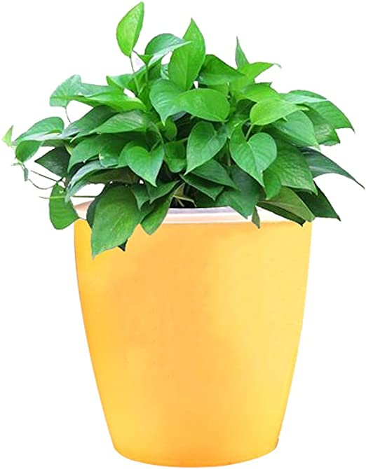 Maceta de riego para plantas, macetas, macetas, jardín, polipropileno, 4 colores: Amazon.es: Jardín