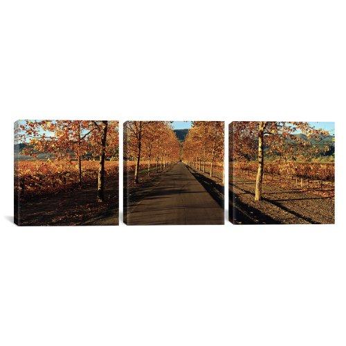 - iCanvasART 3-Piece Vineyards Along a Road, Beaulieu Vineyard, Napa Valley, California, USA by Panoramic Images Canvas Art Print, 48 by 16-Inch
