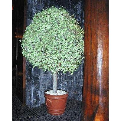 Mosser Lee ML1130 Marble Nuggets Soil Cover, 5 lb. : Outdoor Decorative Stones : Garden & Outdoor