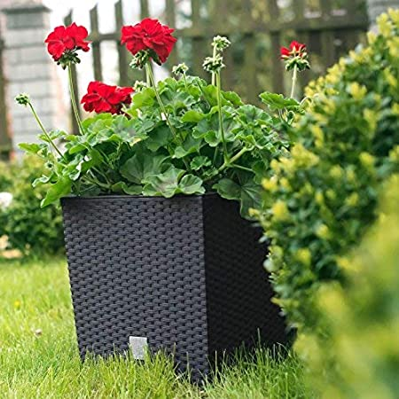 265 Umbra Blumenk/übel Blumenkasten Blumentopf /Übertopf Rattan Optik Pflanzk/übel mit Einsatz Modell Low