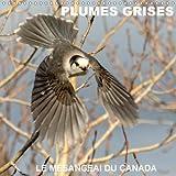 Plumes Grises - Le Mesangeai Du Canada 2018: Rencontre Avec Le Mesangeai Du Canada (Calvendo Animaux) (French Edition)