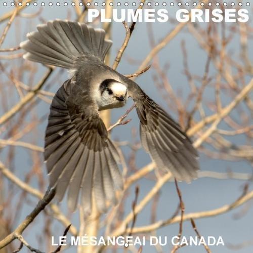 Plumes Grises - Le Mesangeai Du Canada 2018: Rencontre Avec Le Mesangeai Du Canada (Calvendo Animaux) (French Edition) by Calvendo Verlag GmbH