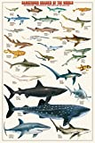 Dangerous Sharks of the World Poster Print, 24x36