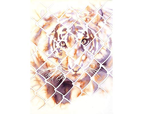 Watercolor painting of tiger looking through cage at San Diego Zoo Safari Park- California (print)