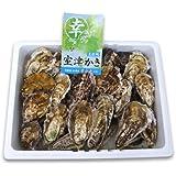 室津牡蠣 殻付き牡蠣3kg 漁師直送!朝取れ牡蠣 【幸永丸水産】 かき カキ 牡蠣
