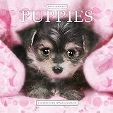 Keith Kimberlin Puppies 2013 Wall Calendar