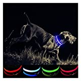 Petabunga Premium LED Dog Collar, USB Rechargeable & Superior Durability to Increase Dog Visibility & Safety, Glows at Night, Because Your Dog is Worth It