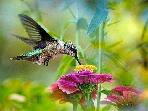 Hummingbird Print, Nature Photography, Fine Art Photo, Colorful Bird Picture, Ruby Throated Hummingbird