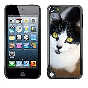 GoGoMobile Slim Protector Hard Shell Cover Case // M00117653 Cat Cat Face Head Pet Cat'S Eyes // Apple ipod Touch 5 5G 5th