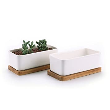 Macetas con bandeja de bambú – Cactus, para flores, plantación, Mini, color