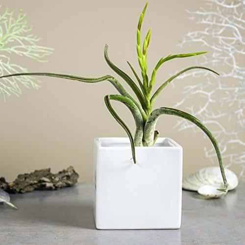 Amazon.com: Mini Planter White Cube Ceramic Vase, Square