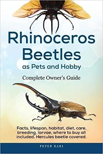 rhinoceros beetles as pets and hobby complete owner s guide facts