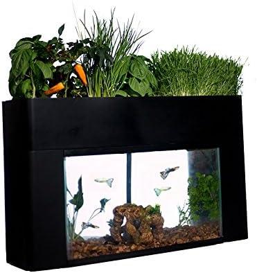 AquaSprouts-10-Gallon-Aquaponics-Fish-Tank