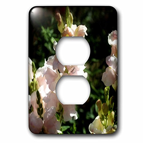 WhiteOaks Photography and Artwork - Snapdragons - Lightest Pink Snapdragons is a photo of very light pink flowers - Light Switch Covers - 2 plug outlet cover (lsp_232031_6) - Pink Snapdragons