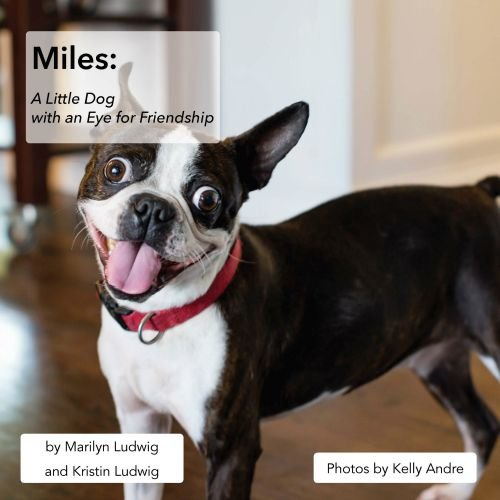 Miles: A Little Dog with an Eye for Friendship