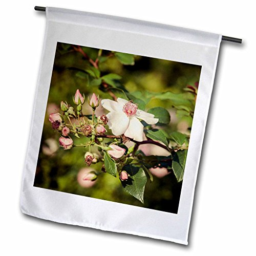 3dRose Alexis Photography - Flowers Rose - Briar flower and buds, vintage colors - 18 x 27 inch Garden Flag (fl_267227_2) ()