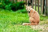 FHYGJD Orange Cat Look Back Fence Art Print Canvas Poster,Home Wall Decor(28x42 inch)