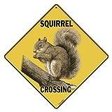 """Squirrel Crossing 12"""" X 12"""" Aluminum Sign"""