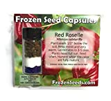 Thai Red Roselle Seeds
