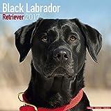 Black Labrador Calendars 2017 - Lab - Retriever - Dog Breed Calendars - 2016 - 2017 wall calendars - 16 Month by Avonside