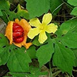 buy Bitter Melon Seeds (Momordica charantia) 5+ Rare Organic Medicinal Fruiting Vine Seeds in FROZEN SEED CAPSULES for the Gardener & Rare Seeds Collector - Plant Seeds Now or Save Seeds for Years now, new 2018-2017 bestseller, review and Photo, best price $8.95