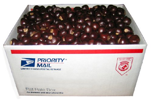 Dimpled Buckeye Nuts By The Box - A USPS Medium Flat Rate Bo
