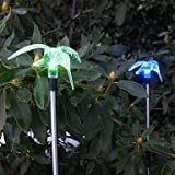 Set of 2 Garden Color Changing Solar Hummingbird Stake Lights by Garden Sunlight