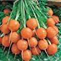200+PARISIAN ROUND CARROT SEEDS French Market Heirloom Non-Gmo LITTLE SEED STORE