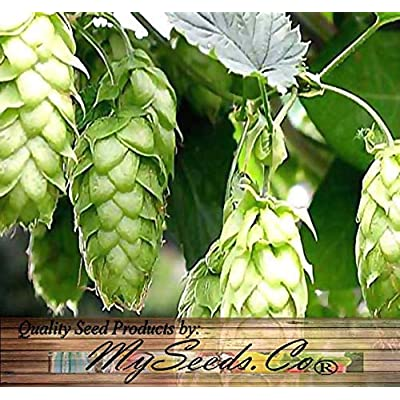 Risalana Humulus lupulus - Seeds - Brew Your OWN Beer Today - Returns Year After Year - Plants Form Rhizomes - Zones 3-8 (1/4 oz) : Garden & Outdoor