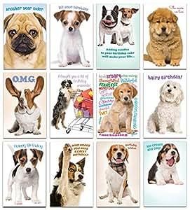 Amazon.com: Prime Greetings – Juego de 12 tarjetas de ...