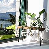 LESES Air Plant Terrarium, Desktop Glass Planter
