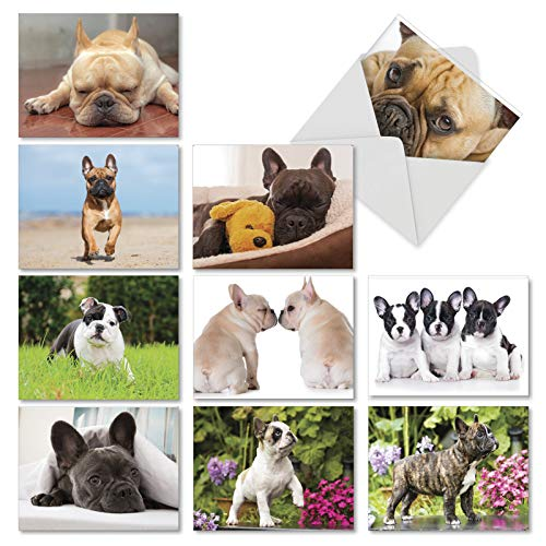 Beautiful Bulldogs - 10 Assorted All Occasion Note Cards with Envelopes 4 x 5.12 inch - Adorable French Bulldog Breed Blank Greeting Cards - Boxed Dog, Animal Notecard Stationery AM6298OCB-B1x10