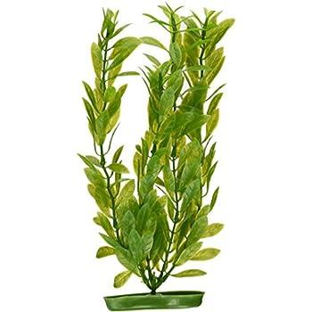 12-Inch Marina Aquascaper Hygrophila Large Plant