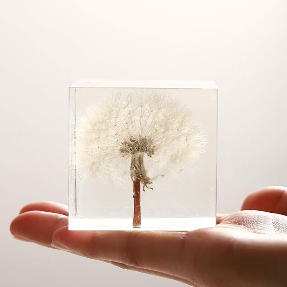 Real Dandelion Specimen Paperweight (2x2x2 Inch) by Amazingbug