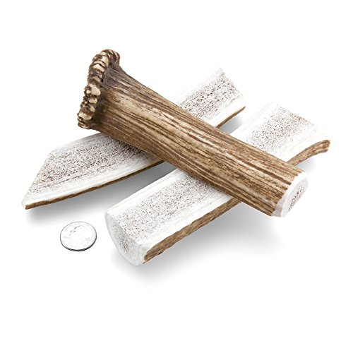 Mountain Dog Chews 2-Pack Medium Split Elk Antler Dog Chew 7-9 Inch Long Size Grade-A+ Made In The USA From The Freshest, Highest Quality Elk Antlers Long Lasting 100% Organic Dog Chews by Mountain Dog Chews (Image #1)